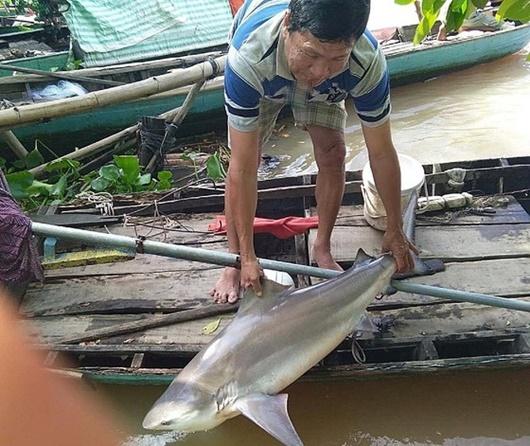 Ngư dân Đồng Tháp bắt được cá lạ, nhìn giống cá mập - Ảnh 1