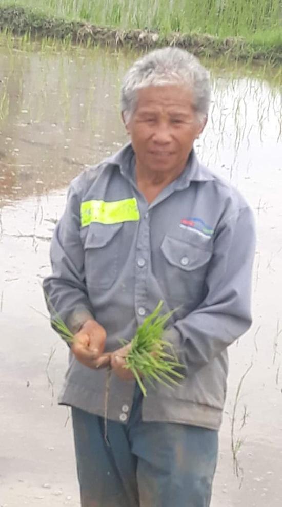 30 công nhân xuống ruộng cấy lúa giúp cụ ông giữa trời nóng 40 độ - Ảnh 2