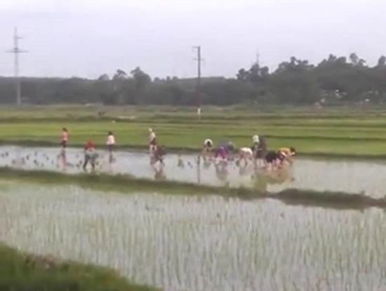 30 công nhân xuống ruộng cấy lúa giúp cụ ông giữa trời nóng 40 độ - Ảnh 1