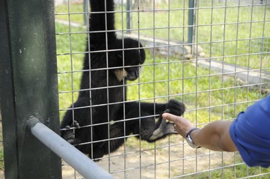 """Vườn thú đẳng cấp của """"đại gia điếu cày"""" Lê Thanh Thản tại quê nhà - Ảnh 6"""