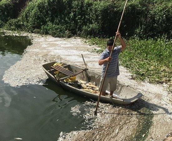 Hải Dương: Điều tra vụ hơn 3 tấn cá chết bất thường, nghi bị đầu độc - Ảnh 1