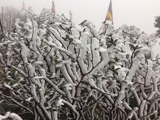 Sapa xuống dưới 0 độ, đỉnh Fansipan phủ trắng băng tuyết như trời Âu vào ngày mùng 3 Tết - Ảnh 2