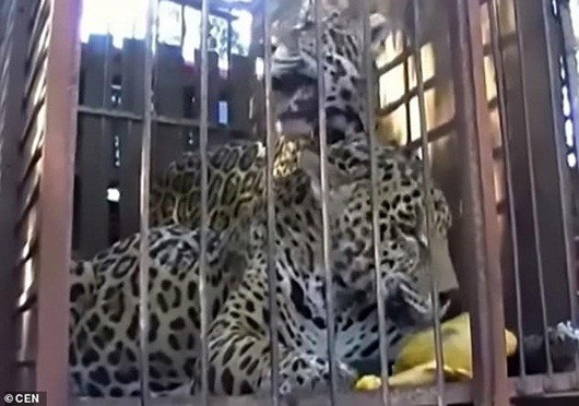 Người phụ nữ trả giá bằng 1 cánh tay khi vượt hàng rào an ninh để selfie với báo - Ảnh 1