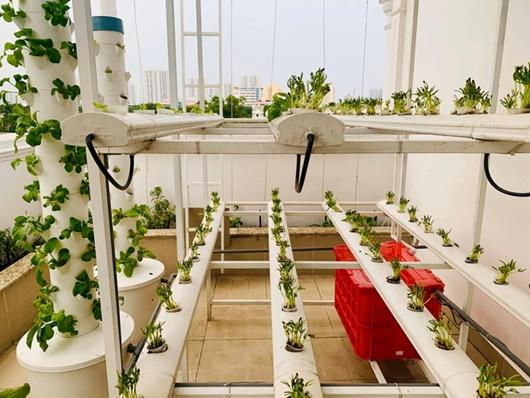 """Cận cảnh vườn rau """"xanh mát, ngon lành"""" trên sân thượng nhà MC Đại Nghĩa - Ảnh 1"""