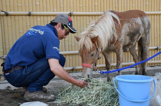 Nhật Bản: Ngựa đi lạc lên mái nhà sau trận lũ quét lớn - Ảnh 2