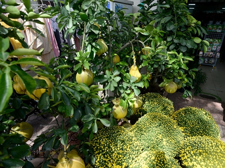 """Hoa kiểng, trái cây chơi Tết """"độc, lạ"""" ngập tràn ở TP. Hồ Chí Minh - Ảnh 4"""