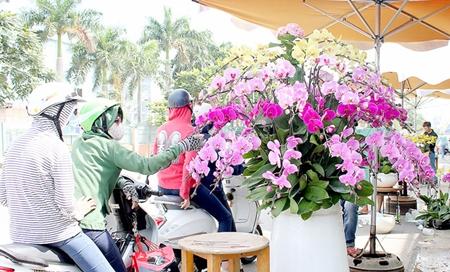 """Hoa kiểng, trái cây chơi Tết """"độc, lạ"""" ngập tràn ở TP. Hồ Chí Minh - Ảnh 1"""