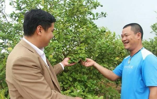 Tài xế xe khách bỏ nghề về trồng chanh đào, thu tiền tỷ mỗi năm - Ảnh 1