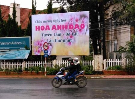 Đà Lạt bất ngờ hủy lễ hội hoa anh đào vì hoa chưa nở - Ảnh 1