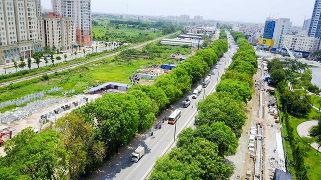 Hà Nội xem xét chặt hạ, di chuyển hơn 1.300 cây xanh để làm đường - Ảnh 1