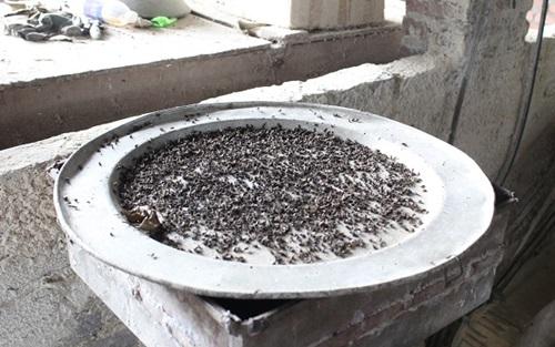 Người dân Sóc Sơn khốn khổ vì mùi rác, ruồi chết tính bằng cân - Ảnh 2