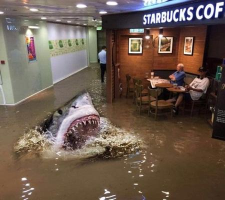 Người đàn ông thản nhiên ngồi đọc báo giữa quán café lụt lội - Ảnh 4
