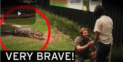 Chàng trai vừa cho cá sấu ăn vừa cầu hôn - Ảnh 1