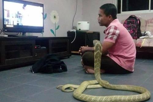 Chàng trai cưới rắn hổ mang làm vợ vì tưởng bạn gái đầu thai - Ảnh 1