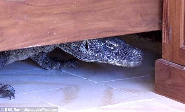 Kinh hoàng phát hiện rồng Komodo trong phòng tắm - Ảnh 2