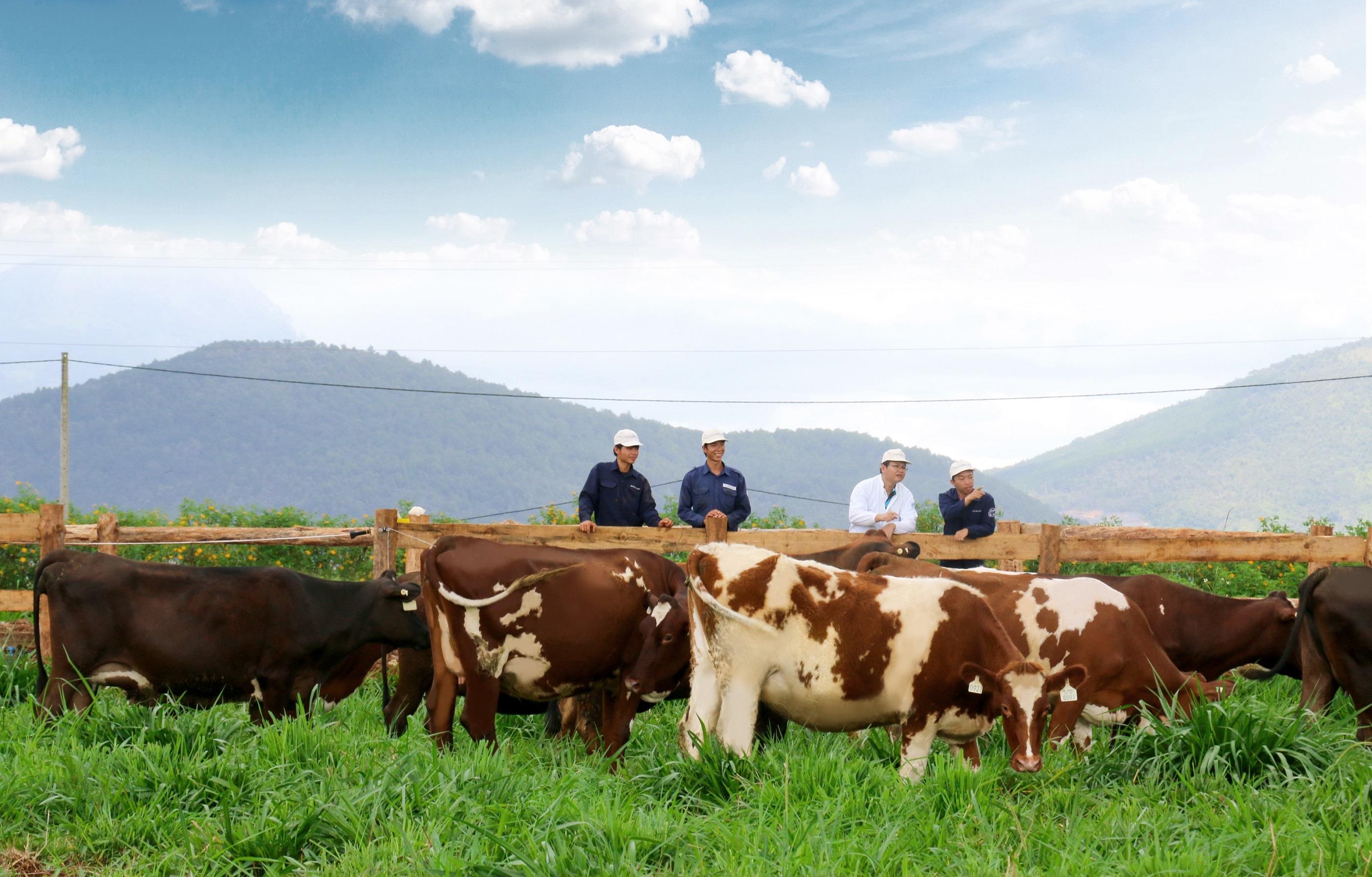 Trang trại bò sữa Organic theo tiêu chuẩn Châu Âu đầu tiên tại VN của Vinamilk - Ảnh 3