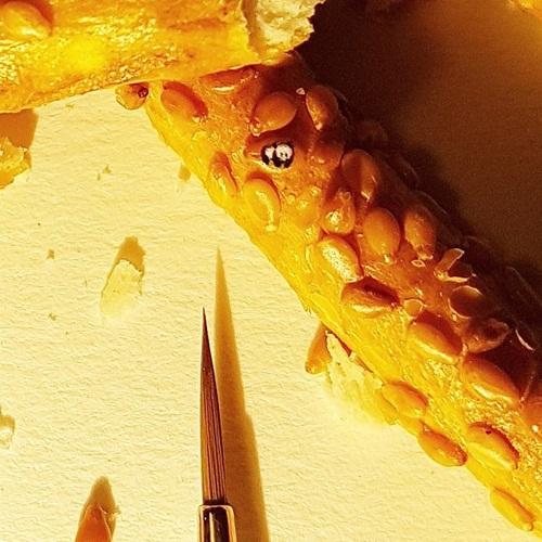 Ngắm những bức tranh được vẽ trên hạt gạo, vỏ ốc... đẹp như mơ - Ảnh 11
