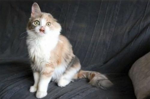 """Ngạc nhiên xem quá trình """"lột xác"""" của chú mèo 'xấu xí' nhờ phẫu thuật thẩm mỹ - Ảnh 7"""