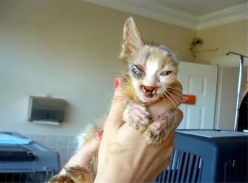 """Ngạc nhiên xem quá trình """"lột xác"""" của chú mèo 'xấu xí' nhờ phẫu thuật thẩm mỹ - Ảnh 1"""