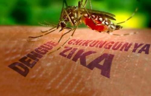 TP. HCM: 2 bà bầu nhiễm vi rút Zika đã chấm dứt thai kỳ - Ảnh 1