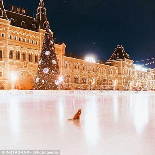 Mê mẩn cảnh tuyết rơi trắng xóa ở Nga - Ảnh 14