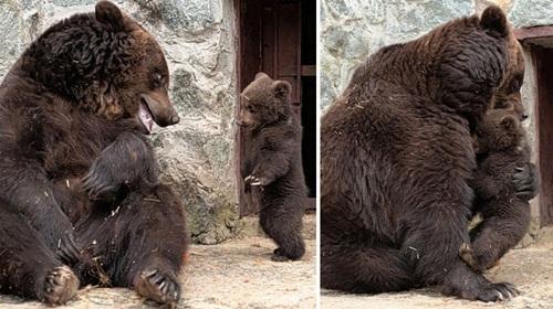 Học hỏi được gì từ cách dạy con của loài gấu - Ảnh 10