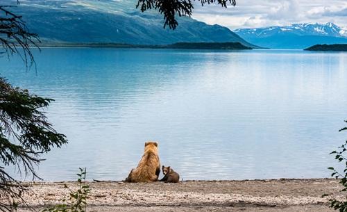 Học hỏi được gì từ cách dạy con của loài gấu - Ảnh 8