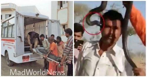 Người đàn ông tử vong vì sở thích chụp ảnh với rắn - Ảnh 1