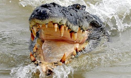 Chàng trai suýt mất cánh tay vì nhảy xuống sông có cá sấu - Ảnh 1
