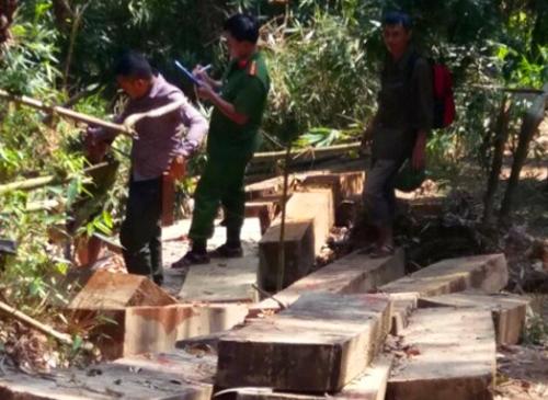 3 đối tượng đang khai thác gỗ trái phép ở rừng đầu nguồn thì bị bắt - Ảnh 2