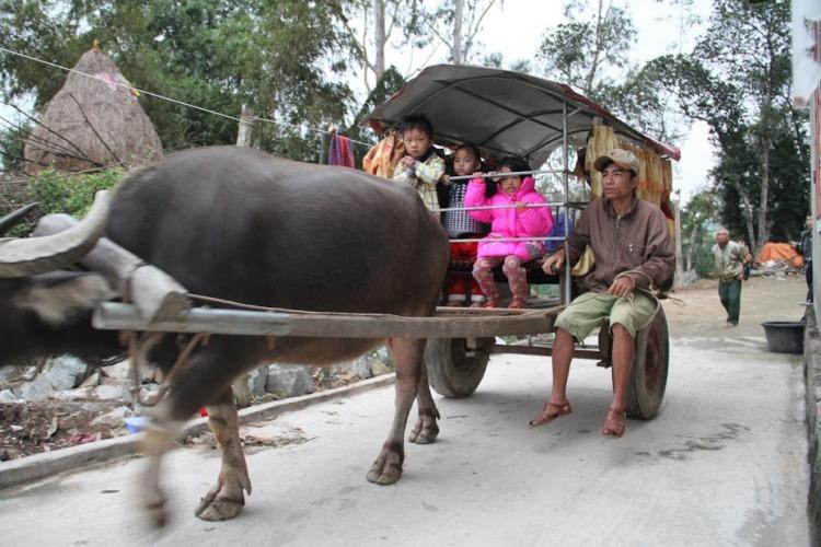 Người đàn ông tật nguyền hàng ngày chở học sinh đến trường bằng xe trâu - Ảnh 1
