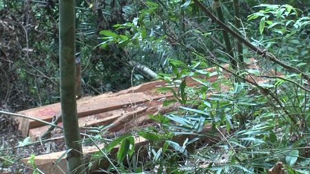 3 đối tượng đang khai thác gỗ trái phép ở rừng đầu nguồn thì bị bắt - Ảnh 3
