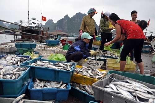 Đánh bắt, tiêu thụ hải sản 4 tỉnh: Lập bản đồ vùng biển cấm! - Ảnh 1