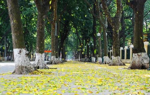 Tìm hiểu 3 lý do vì sao mùa đông cây rụng lá? - Ảnh 1