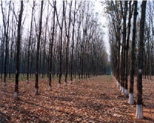 Tìm hiểu 3 lý do vì sao mùa đông cây rụng lá? - Ảnh 2