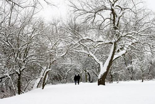 Tìm hiểu 3 lý do vì sao mùa đông cây rụng lá? - Ảnh 3