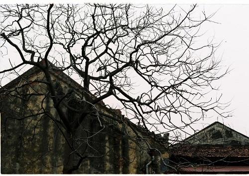 Tìm hiểu 3 lý do vì sao mùa đông cây rụng lá? - Ảnh 4