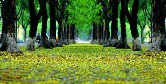 Top 5 địa điểm chụp ảnh mùa thu ở Hà Nội đẹp đến nao lòng - Ảnh 2