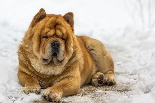 Bật mí 9 sự thật thú vị về loài chó bạn nên biết - Ảnh 1