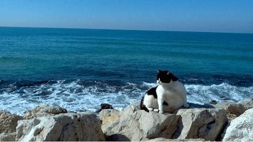Lý giải hiện tượng tại sao nước biển không uống được? - Ảnh 5