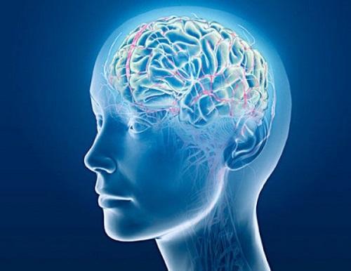5 sự thật thú vị về bộ não, bạn đã biết chưa? - Ảnh 4