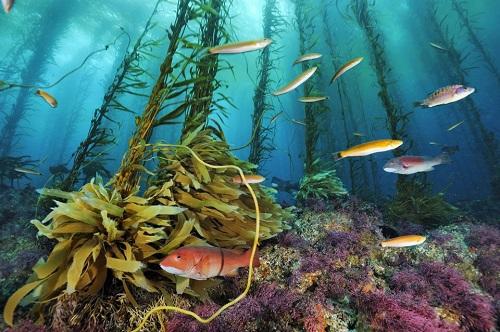 Tổng hợp những điều thú vị về đại dương xanh mà bạn chưa khám phá hết - Ảnh 2