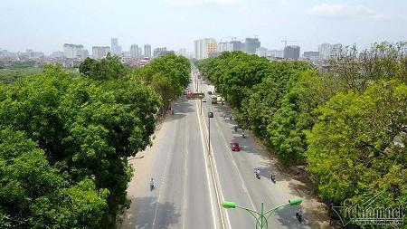 """Chủ tịch Hà Nội: """"Không thể trồng lại xà cừ cổ thụ trên các tuyến phố"""" - Ảnh 1"""