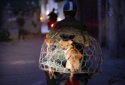 Theo chân đội bắt chó thả rông chỉ trong 3 phút ở Hà Nội lúc tờ mờ sáng - Ảnh 4