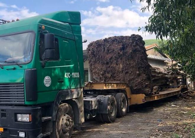"""CSGT Thừa Thiên- Huế chặn xe đầu kéo chở """"quái thú"""" từ Đắk Lắk ra chùa ở Ninh Bình - Ảnh 2"""