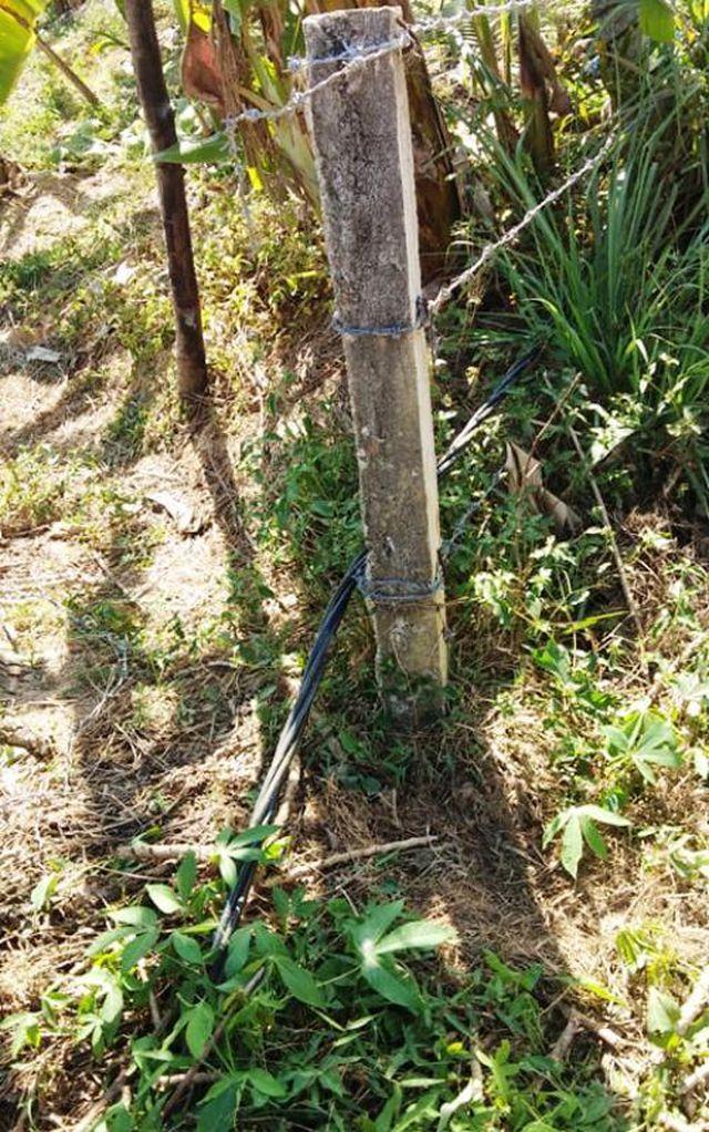Vụ đôi vợ chồng bị điện giật ở vườn chuối: Giám đốc điện lực nói không liên quan - Ảnh 2