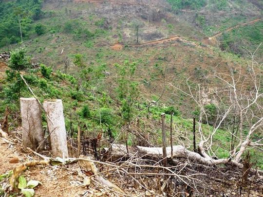 Khởi tố vụ 2 cha con phá 11.300 m2 rừng tự nhiên - Ảnh 1