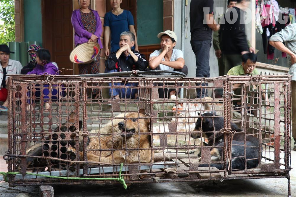 Đàn chó cắn chết bé trai 7 tuổi ở Hưng Yên được chuyển về trụ sở công an - Ảnh 2