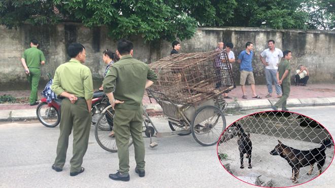 Đàn chó cắn chết bé trai 7 tuổi ở Hưng Yên được chuyển về trụ sở công an - Ảnh 1