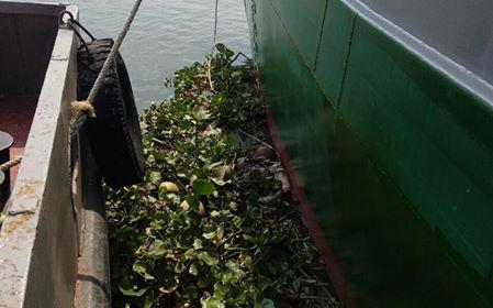 Đi câu cá, phát hiện thi thể người phụ nữ trôi trên sông Sài Gòn - Ảnh 2